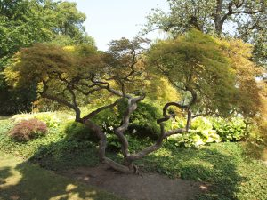 Baum QiGong 2 wohltuende Entspannung